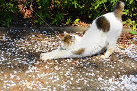 「猫のフリー写真」の画像検索結果