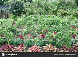 vegetable and fruit garden with small apple trees growing between flowers stock photo