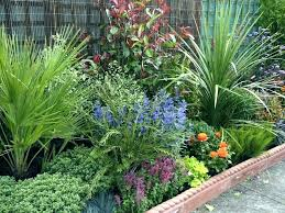 low maintenance plants for central florida best low maintenance landscaping plants native low maintenance landscape plants