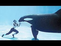 killer whale attacks on humans. Expert Whale Trainers Attacked In BLACKFISH With Killer Attacks On Humans
