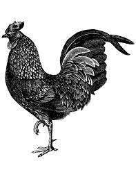 vintage chicken clipart black and white.  White For Vintage Chicken Clipart Black And White I