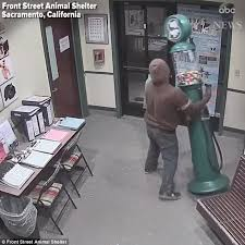 california animal shelter shares surveillance of the candy crook who after a