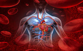 Image result for coronary artery disease treatment
