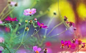 3d hd wallpapers flowers. Exellent Flowers HD Flower Wallpaper Intended 3d Hd Wallpapers Flowers R