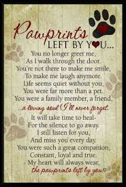 Loss Of A Pet Quote 100 Sympathy Quotes To Help Cope With Death Of A Pet YourTango 11