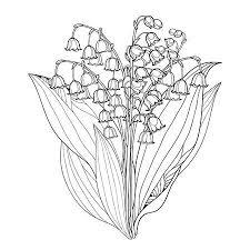 Bouquet Mit Umriss Weißen Maiglöckchen Oder Convallaria Blumen Und