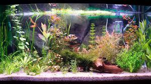 Image result for right equipment for aquarium cleaning
