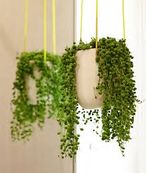 10 undemanding indoor plants to have in your house or office stay at home mum