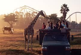 early morning on the serengeti safari tour at busch gardens