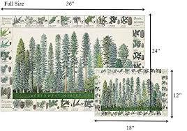 Tree Identification Chart Amazon Com Northwest Conifers Tree Poster Identification
