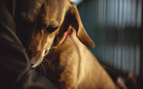 5 tips for soothing terrified dogs