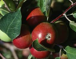 How To Prune Peach TreesPrune Fruit Tree