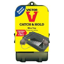 victor multi catch live mouse trap