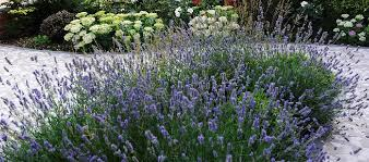 Small Picture Breeze Garden Design London based in Ealing West London
