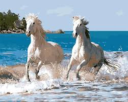 horses running. Perfect Horses Horses Running In Water And Running