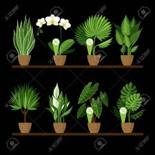 decorative plants for office. Vector Collection Of Indoor, House Plants In Pots On A Shelf. Home Decorative And For Office F
