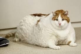 「胖」的圖片搜尋結果