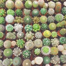 Small Picture 79 Awesome Indoor and Outdoor Cactus Garden Ideas Design
