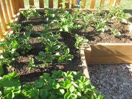 Small Picture Vegetable Garden For Beginners Gardening Ideas