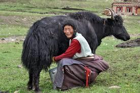 Image result for yak milk soap