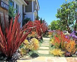 drought resistant garden. Drought Resistant Garden Design Trendy Best Ideas About Tolerant On Landscape Water .