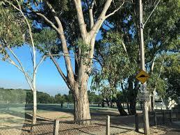Nice playground - Review of Macleay Park, Balwyn North, Australia -  Tripadvisor