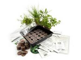 Small Picture Exceptional Indoor Culinary Herb Garden Kit Part 8 Exceptional