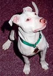 deaf dogs in Nova Scotia - profiles