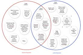 Venn Diagram Photosynthesis And Cellular Respiration Photosynthesis Vs Cellular Respiration Venn Diagram Lovely Interior