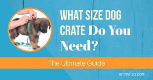 Midwest Icrate Size Breed Chart What Size Dog Crate Do You Need The Ultimate Guide Animalso
