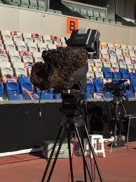 Fatih Terim Stadyumu'nda kamerayı arılar sardı