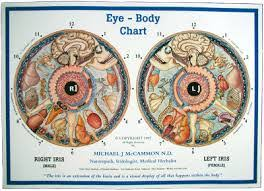 Dr Bernard Jensen Iridology Chart Iridology T H R I V E Therapies