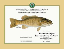 Bass Species Chart Tennessee Angler Recognition Program