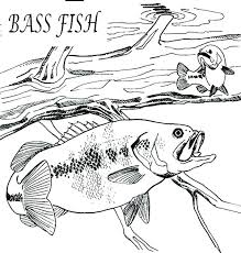 bass fish coloring pages. Interesting Coloring Bass Coloring Pages Fish Page Printable  Pro  With Bass Fish Coloring Pages S