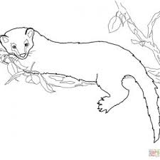 Small Picture Binturong Animal Coloring Pages Binturong nebulosabarcom