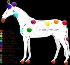 Animal Chakra Chart Equine Chakras Part 1 Horse Shaman