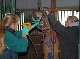 Veterinarian Technician Salary Equine Veterinary Technician Veterinary Technician Schools