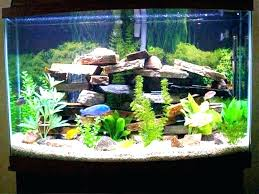diy betta fish tank ideas small awesome tanks cool decoration l