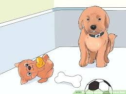 keep dogs out of flower beds how to keep dogs out of flower beds garden plants