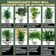 Office feng shui plants Interior Design Feng Shui Plants Office Plants Indoor Plants That Clean The Air Yahoo Image Search Results Feng Shui Lovetoknow Design Feng Shui Plants Feng Shui Plants Placement Feng Shui Plants