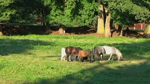 farm animals together. Brilliant Animals Farm Animals Grazing Together In Stock Footage Video 100 Royaltyfree  15147196  Shutterstock With M