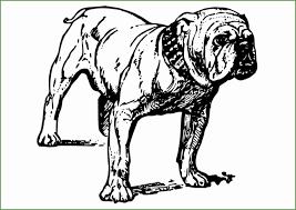4 Bulldog Kleurplaten 85363 Kayra Examples