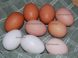 Uncategorized Coloredeggs Welsummer Egg Color Chart