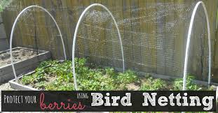 bird netting for garden. keep the birds out and your berries in! bird netting for garden e