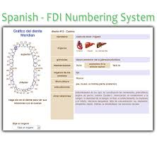 Tooth Meridian Chart Spanish Tooth Chart Fdi Numbering System Interactive