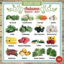 Autumn Veg Seasonal Chart Timeline Content_1080x1080_11