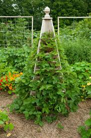 Annies Kitchen Garden 17 Best Images About The Complete Kitchen Garden On Pinterest