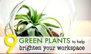 best indoor office plants. office plant no sunlight best plants 9 low maintenance for the green design indoor