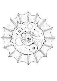 Cat mandala coloring pages - Hellokids.com
