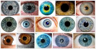 Eye Color Chance Chart Structural Eye Color Is Amazing Paul Van Slembrouck Medium